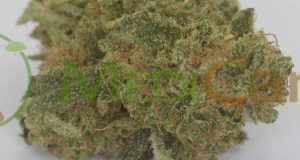 CBD Indoor Blüten – MediCann Gold – Ice