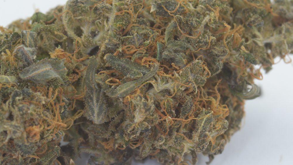 CBD Indoor Blüten - MediCann Gold - Dinamed