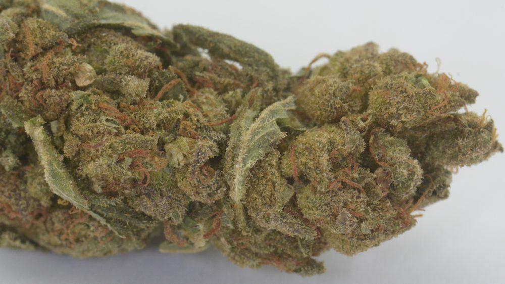 CBD Treibhaus Blüten - MediCann Blau - Super Bud