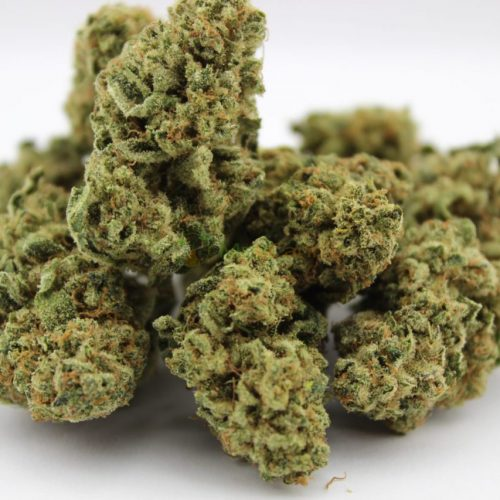 CBD Indoor Blüten – MediCann Gold – Ice