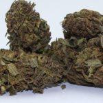 CBD Outdoor Blüten – MediCann Grün – Lemon K2